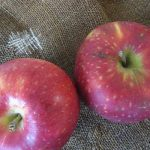 いつもより、ちょっと早いけど、りんごの旬もマジ始まった!今秋は、フルーツの旬を追うのがちょっと忙しいです。まあいいけど😊。/旧暦9/6・己卯