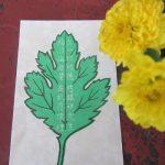 """秋深まれば、菊の行事が続きます。今日は、浅草寺のご縁日が「""""菊""""とっかえ」の「菊供養会」。/旧暦9/10・癸未"""