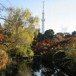向島百花園の晩秋…があまりにも素敵だったのでここに。/旧暦10/13・丙辰