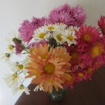 我が家も小さな菊まつり開催中。ってか、菊ってこんなに長く持つの?びっくりですっ(◎_◎;)。/旧暦10/9・壬子