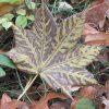 東京にも冬到来で、紅葉狩りも最終コースか?ってことで、これまでの紅葉コレクションを公開🍂。/旧暦11/4・丙子