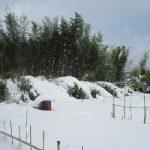 七十二候は「雪下出麦」に。年末年始に過ごす東北の街は雪景色。その下にも芽吹きあるのかな?/旧暦11/28・庚子