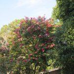 今日は、ホントの平成最後の祝日。ならば、いちばん似合いの皇居の庭へ…おっと、休苑だっ!今年も妄想散歩を😊。/旧暦11/17・己丑