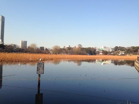 二十四節気は「雨水」に。雪や氷ではなく、雨に水。東京ではすでに氷点下の朝はなくなり暖かな晴れの日続きです☀。/旧暦1/15・丁亥