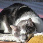 今日は、2=にゃん、2=にゃん、2=にゃんの超語呂あわせにて「猫の日」です。そんな由来でいいのか?いいんです可愛いから=^_^=。/旧暦1/18・庚寅