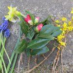 東京と約半月遅れの福島の春。母の庭からの花土産、まだまだ、ちょっとゆっくりめの春を演出中です(*'∀')。/旧暦2/24・丙寅