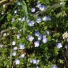 ふと気が付けば、空き地には花々の彩り。彼岸の日々は、春加速の日々です。って、あらら今日は彼岸明け(◎_◎;)。/旧暦2/18・庚申