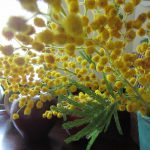 道々に眺めた雑草の中に、たんぽぽ発見!となると黄色い花を飾りたく…花屋も黄色く染まっていました。今日は「ミモザの日」。/旧暦2/2・甲辰