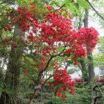 今日は「植物学の日」。由来は、植物学者・牧野富太郎博士の誕生日ってことで、今日もゆかりの地「牧野記念庭園」へ。/旧暦3/20・辛卯