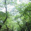 梅雨ぶっとばして真夏日来襲。見上げれば、濃い緑に繁った樹々と、道々にできた美しいレース模様に暑さ忘れる(*'∀')/旧暦4/24・乙丑