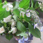 梅雨の時期の帰省土産は、もちろんあの鮮やかな花。あっ!この清浄な薫り高い花もと持ち帰り、ずいぶん経ったけれどまだ元気ですっ( *´艸`)。/旧暦6/1・辛丑・新月!