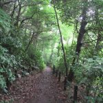 夏休み自由研究きどって、都会の森へ。「自然教育園」行ってきました。…って灼熱夏に入る前のことですが(*'▽')。/旧暦7/7・丙子