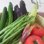 二十四節気は「立秋」に。暦が秋の気配と言い出すと、不思議に新鮮で安い夏野菜が続々と(*'▽')!/旧暦7/8・丁丑
