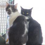 今日は「招き猫の日」。ってことで恒例、母の家に招いた猫と招かれた猫を。/旧暦9/1・己巳・新月!