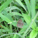 二十四節気は「白露」に。日中は猛暑ぶり返しですが、朝晩は涼しい日々到来。草々に露、美しい虫たち。…台風来てますけどね😓。/旧暦8/10・戊申