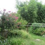 秋桜(こすもす)咲き乱れる中で、紫蘇(しそ)の花も咲く。あっ!鶏頭(けいとう)も??母の庭からいろいろいただき今日帰京(*'▽')!/旧暦8/29・丁卯