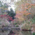 二十四節気は「小雪」に。暦はもう「雪」の話かぁ。東京の街は、まだまだ晩秋と初冬の合間をいったりきたりです(*'▽')/旧暦10/26・癸亥