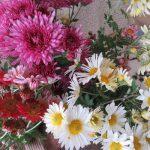 母の庭からお土産いただき、そろそろ帰京。で、いろいろ迷ってやっぱり可愛い小菊を(*'▽')/旧暦10/11・戊申