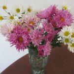 我が家も小さな「菊まつり」。って母の庭から帰京土産にもらってきた小菊ですが。丈夫で美し(*'▽')/旧暦10/15・癸丑