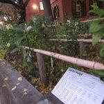七十二候は「乃東生」に。「乃東草」は見ないけど、冬至すぎたばかりの日々に「生=芽吹く」って言葉がいいねと思う。思いながら植物のある場所へ。/旧暦11/27・甲午