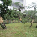 七十二候は「熊蟄穴」に。動物たちはいよいよ冬眠の季節。東京の街でも樹々が冬支度です。/旧暦11/16・癸未