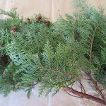 師走の日々は江戸人真似て…のその2。今日は「松迎え」なんで、針葉樹つながりで枝葉を買ってきました(*'▽')。/旧暦11/17・甲申