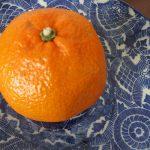 あっと言う間に3月!いろいろあるけど、まずは「春みかん」こと「春柑橘」を眺めて、食べて春の訪れを素直に喜ぼうと思います(*'▽')/旧暦2/7・癸卯