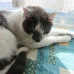 2.22=にゃん・にゃん・にゃんで、今日は「猫の日」。由来に苦笑しつつも、だって可愛いんだもんしかたないよねぇ(=^・^=)。/旧暦1/11・辛丑