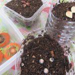 今日は、春の「社日」。暦で見て、何の日?「土の神」を祀る日だそうで、今日は土に種蒔きます(*'▽')。/旧暦2/22・戊午