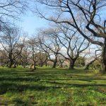 今日は「春彼岸入」。東京では、彼岸前に「染井吉野」の開花宣言だったりし。ならばと、いちばん好きな桜並木の開花状況も確認しに行ってきました🌸。/旧暦2/23・己未