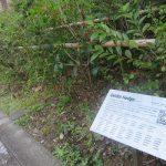 桜満開!ならば、それ以外にも、見ておきたい花々あります。武蔵野の木々を植樹したその名もGeidai Hedge(*'▽')。/旧暦3/5・庚午