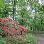黄金週間…って誰が名付けたんだろう?その初日の今日は「昭和の日」。所縁の方に近しい場所・皇居の庭の雑木林のことを(*'▽')。/旧暦4/7・壬寅
