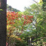 今日は植物学者・牧野富太郎の誕生日にして「植物学の日」。会いたかった樹々花々をココロに博士の庭に思いを馳せます(*'▽')/旧暦4/2・丁酉