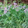 二十四節気は「清明」に。いろいろいろいろ振り回されてるうち初夏の気配。初々しい萌黄色の草々や花は紫や白。/旧暦3/12・丁丑