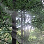 七十二候は「蒙霧升降」に。暦は「霧」というコトバ持ち出して秋へと誘いますが、そんな涼しげな日々はいつ来るだろう?/旧暦6/28・壬辰