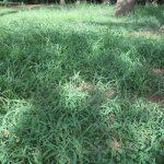 七十二候は「草露白」に。露降って草地が白くヒカル様子は見ないけど、草地観察が楽しい頃にはなりました(*'▽')。/旧暦7/21・甲寅