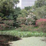 今年は咲き始めが遅かった「百日紅」。約60日目の近所のそれはもう花まばら。しかし、ここは100日咲く気満々な感じ(*'▽')/旧暦8/11・癸酉