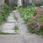 ご近所の白粉花(おしろいばな)の群生地に行ってみたら、もう昼間から咲いていました。ああ、まぎれなく秋です(*'▽')/旧暦7/29・壬戌