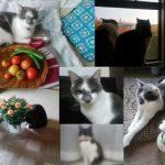 昨日が「招き猫の日」だって忘れてた💦遅ればせながら、母の家の「招いた猫」と「招かれた猫」を!/旧暦8/14・丙子