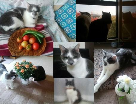 母の猫たち