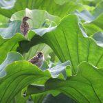 七十二候は「蟄虫坏戸」に。暦が虫たちの冬支度を言い出すと、遭えなくなる光景も多数です。例えばシュッと痩せた雀とかも(*'▽')/旧暦8/12・甲戌