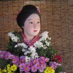 七十二候は「菊花開」に。暦が「菊咲く頃だ」といえば、それは東京・谷中の菊まつりのはじまり…が今年は中止。中止かぁ(-_-;)/旧暦8/28・庚寅