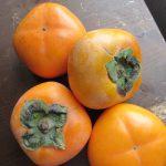 東北の母の庭の柿の木が豊作だとか。となると、いよいよ東京も柿の旬来たる。で買ってきましたっ(*'▽')。/旧暦8/30・壬辰