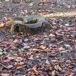七十二候は「朔風払葉」に。北風が吹き、木の葉を払う冬到来。しかし、これは春の芽吹きの準備でもあるのです(*'▽')/旧暦10/13・甲戌