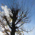 冬将軍が来襲!いきなり寒いです。見上げれば、いつのまにか樹々の色づきは終盤まじかで、ちょっと焦っ(-_-;)。/旧暦11/2・癸巳