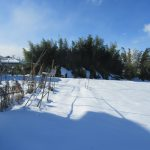 七十二候は「雪下出麦」に。積雪下で麦芽生えと暦。帰省できなかった福島ではしっかり雪降り積んだそうですが芽生えはまだ先。/旧暦11/21・壬子