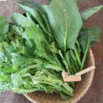 このひと冬せっせと食べてるが、七十二候「黄鴬見睨」の時期にこそ安価な「冬青菜」。これって「鶯菜」って呼び方に倣ってるの?いやまさか(*'▽')/旧暦1/1・辛卯・新月