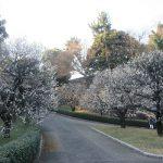 今日の祝日は、皇居の庭で一番美しい花はなにかと思い描きつつ過ごすのが似つかわしい。きっと、早春の花咲き乱れているはずです。/旧暦1/12・壬寅