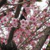1945年の今日「東京大空襲の日」は、1990年から「東京都平和の日」。コロナ禍の中で思うことは、ホントに平和なんだろうかということだったり…。/旧暦1/27・丁巳