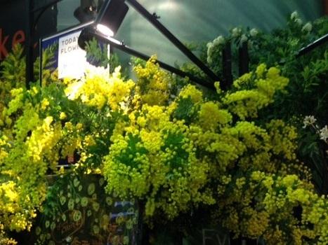花屋のミモザ